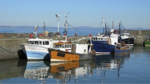 S&J Shellfish - Wholesale Fish Suppliers